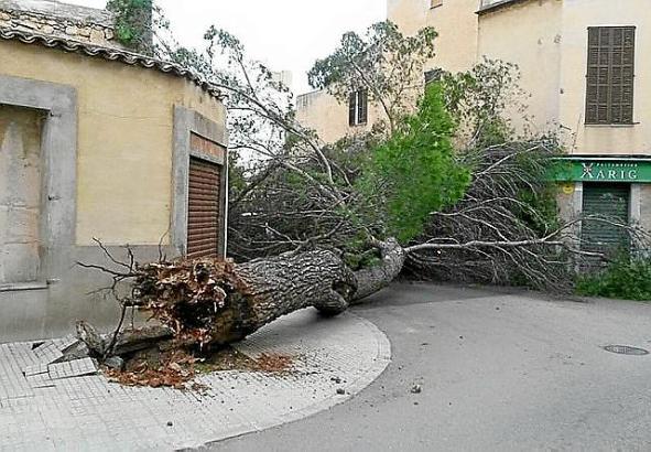 Im Raum Felanitx stürzten Bäume wegen des Sturms auf Häuser und Straßen.