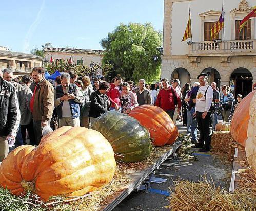 """Groß, größer, Kürbismesse: Die """"Fira de Carabassa"""" in Muro zeigt die Gewächse in allen Farben, dieses Mal am 15. November."""