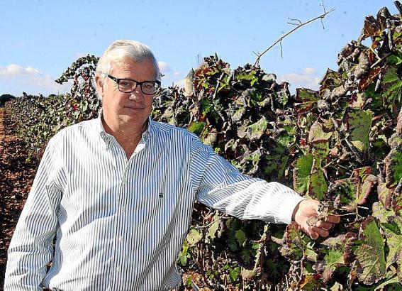 Der Chef von Mallorcas größter Bodega hat den Vorsitz der Anbauregion Binissalem im Frühjahr übernommen.