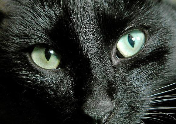 Wie ist das nochmal mit dem Pech? Schwarze Katze von rechts – oder doch von links? Klar ist dagegen: In Spanien ist Freitag der