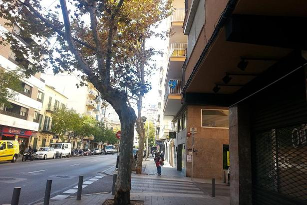 Dieser Baum steht zu nah an der Gebäudewand.