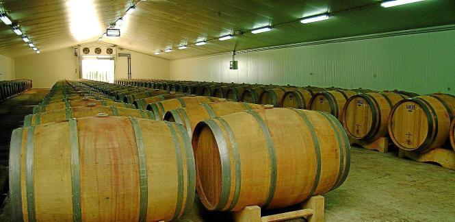 Wein aus Mallorca liegt vor allem in Deutschland voll im Trend.