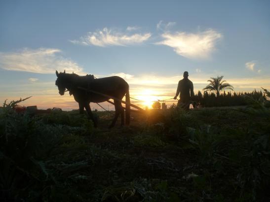 So schön das sonnige Wetter war: Für die Landwirte auf Mallorca sind die angekündigten Regenschauer ein Segen.