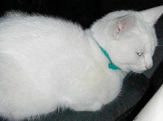 """Die auf Mallorca misshandelte Katze mit dem kuriosen Namen """"Miperro""""."""