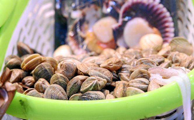 Leckere Venusmuscheln sind in Palma de Mallorca derzeit für rund 16 Euro das Kilo erhältlich.
