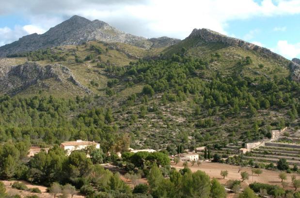 Über 1400 Hektar erstreckt sich die öffentliche Finca Galatzó im Gemeindegebiet von Calvià im Südwesten von Mallorca.