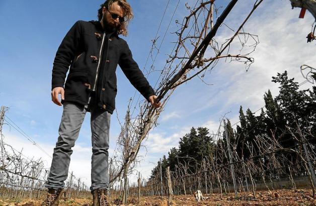 Der Unternehmer Pep Lluis Roses schaut erschüttert die zerstörten Weinstöcke an.