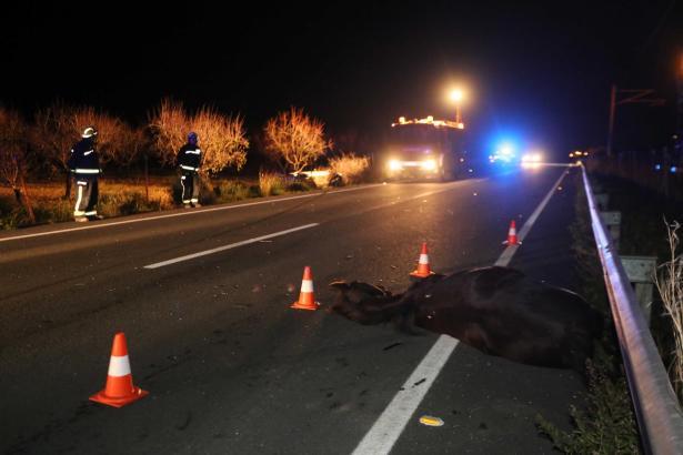 Der Zusammenstoß mit einem Pferd hat einen 28-Jährigen auf der Straße zwischen Lloseta und Inca im Westen von Mallorca das Leben