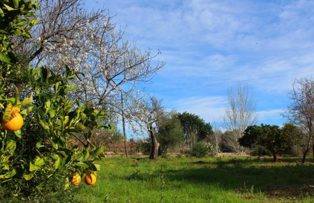 Diese Woche zeigt sich das Mallorca-Wetter winterlich aber sonnig.