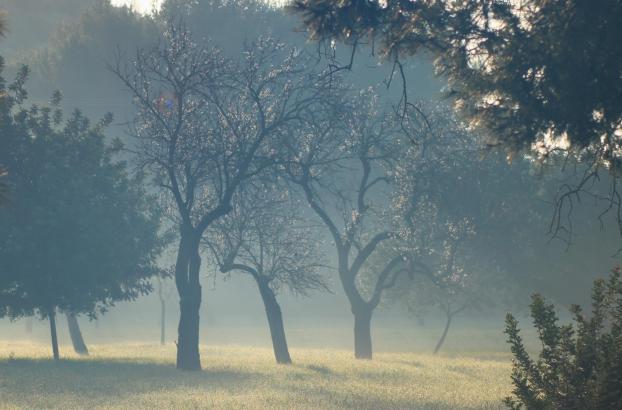 Morgens etwas Nebel, dann viel Sonne: Mallorca erwartet ein freundliches Wochenende.