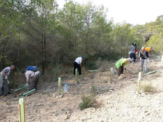 Mehrere Touristen haben am Mittwoch geholfen, ein verbranntes Waldstück in Peguera im Südwesten von Mallorca aufzuforsten.