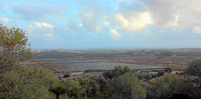 Die Fotomontage zeigt, wie der Solarpark Santa Cirga einmal aussehen wird. Pflanzen-Barrieren dienen als Sichtschutz.