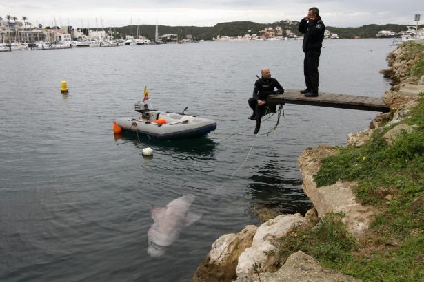 Vor Lazareto wurde der sterbende Hai gefunden.