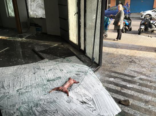 Ein gehäutetes Kaninchen auf einer Straße in Son Gotleu.