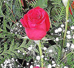 Da der 14. Februar auf einen Sonntag fällt, sollte man sich rechtzeitig nach Blumen umsehen.