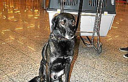 Bis zu 200 Euro müssen Hundebesitzer nun zahlen.
