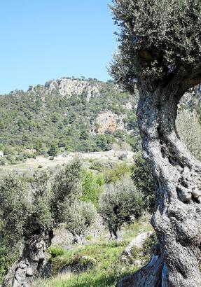 Atemberaubende Landschaft auf der Finca Planícia.