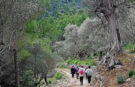 Mal Schotter- mal Waldweg, mal steil und mal eben: Eine Wanderung durch die öffentliche Finca Planícia ist abwechslungsreich.