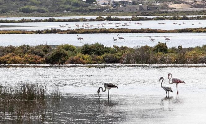 Voraussichtlich werden Teile der Urlaubersteuer auch in die Naturschutzparks auf Mallorca und seinen Schwesterinseln fließen.
