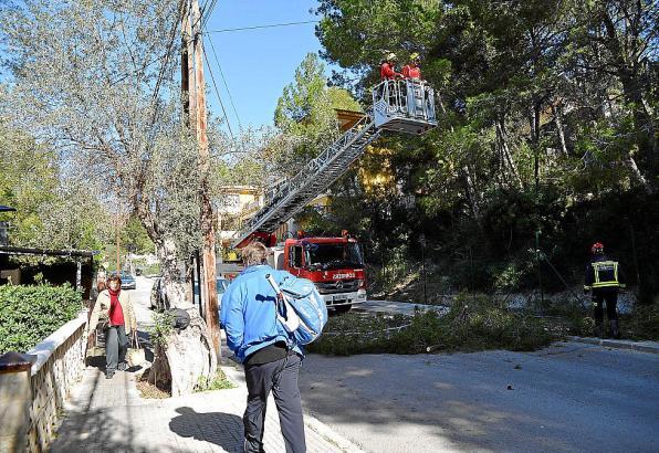 Die Feuerwehr musste zum Beschneiden der Bäume ihren ausfahrbare Leiter einsetzen.