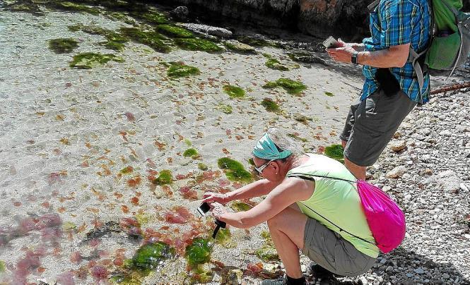 Touristen machen Fotos vom Quallenteppich in der Cala Figuera (Calvià).
