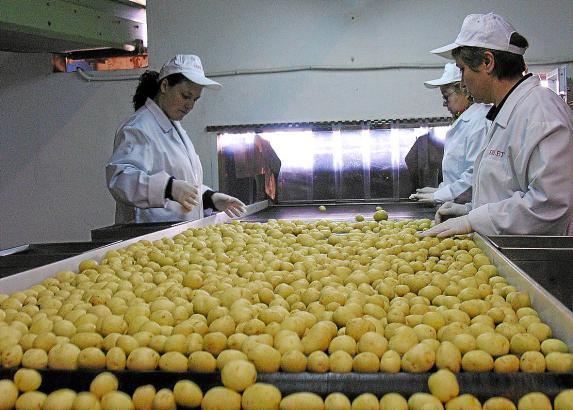 Gerade die Engländer sind traditionell wichtige Abnehmer für die Frühkartoffeln aus Sa Pobla.