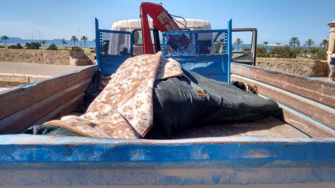Das auf der Stadtmauer von Palma de Mallorca verstorbene Kutschpferd wurde von einem Lkw zur Untersuchung nach Son Reus gebracht