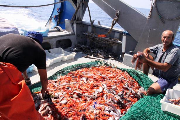 Die Fischer holen in diesen Tag nur 60 Prozent des üblichen Ertrags von Sóller-Garnelen aus dem Meer