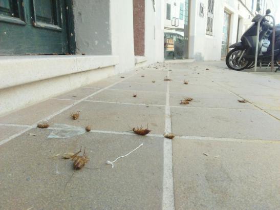 Kakerlaken nach einem Besuch des Kammerjägers