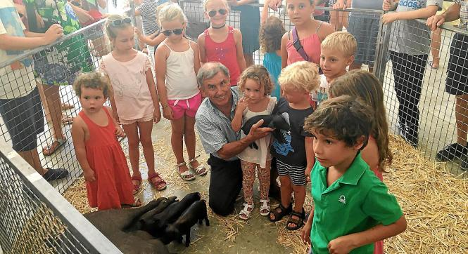 Kinder können in das Tiergehege eintreten und mit den kleinen Ferkeln kuscheln.