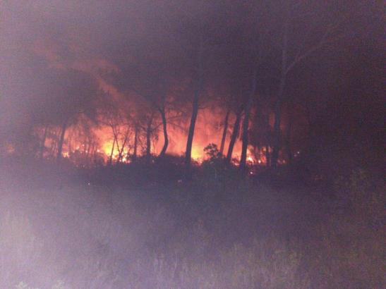 Über zwei Hektar Land wurden bei einem Waldbrand bei Sa Canova auf Mallorca zerstört.