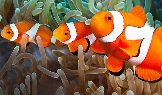 Findet Nemo: Aus der Nähe können Besucher den Clownfisch betrachten.