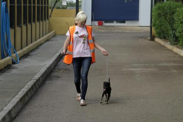 Freiwillige in Son Reus.