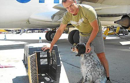 Größere Hunde müssen auf dem Flug nach Mallorca im Kofferabteil mitfliegen.