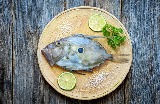 Charakteristisch für den Petersfisch ist vor allem der Kopf mit dem kräftigen Gebiss.