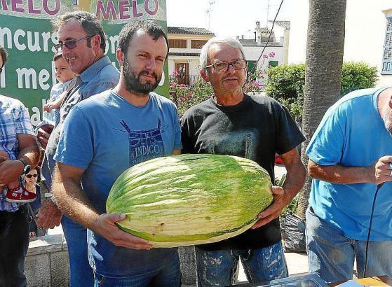 Sebastià Jaume und Bernat Andreu präsentierten am Sonntag in Vilafranca stolz die größte Melone von Mallorca, die 19,4 Kilogramm