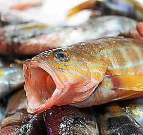 Experten raten dazu, auf kleinere Fische oder Muscheltiere, umzusteigen. Diese würden weniger Quecksilber in sich aufnehmen.