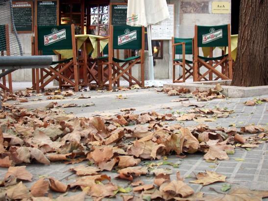 Laub in den Straßen: Der Herbst auf Mallorca soll laut Wetteramt Aemet mild werden.