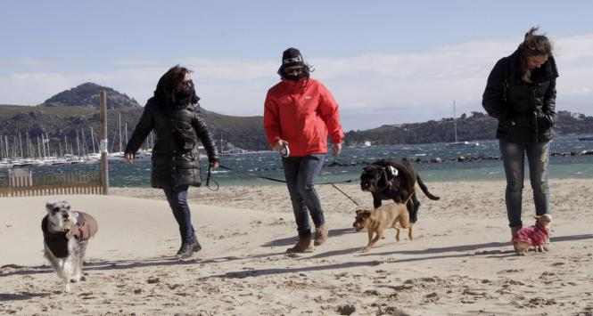 Hund und Herr sind vor allem in den Wintermonaten an den Stränden der Insel unterwegs.