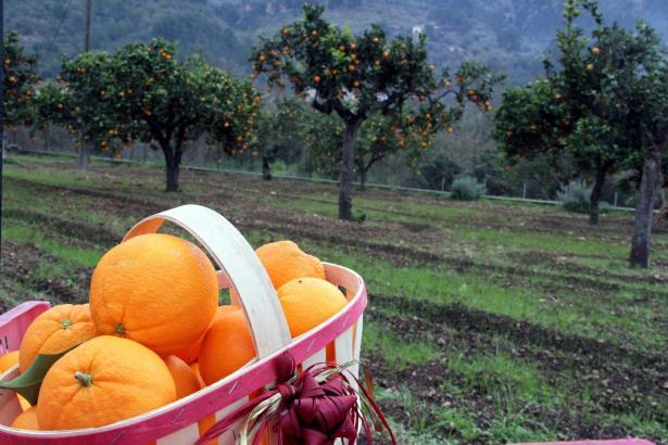 Das Gütesiegel soll das Geschäft mit den Orangen ankurbeln
