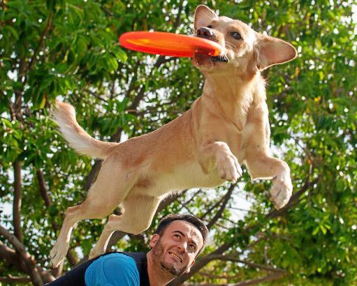 In den Hundeparks der Insel können Herrchen und Hund ausgelassen toben