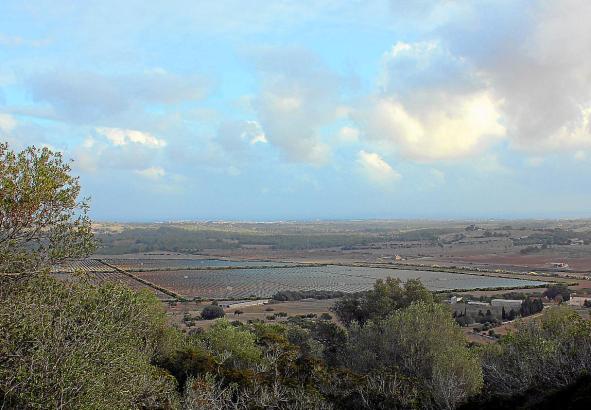 Auf dem Gelände Santa Cirga bei Manacor soll einer der größten Solarparks Mallorcas entstehen.