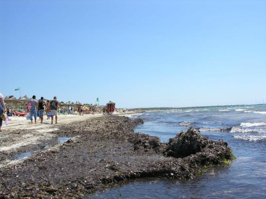 Seegras-Reste am Es-Trenc-Strand im Süden von Mallorca.