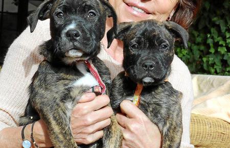 Eine Tierfreundin mit ganz viel Herz: Ihr Zuhause teilt Helga Henrichs mit vielen Vierbeinern, vor allem sind es Hunde und Katze