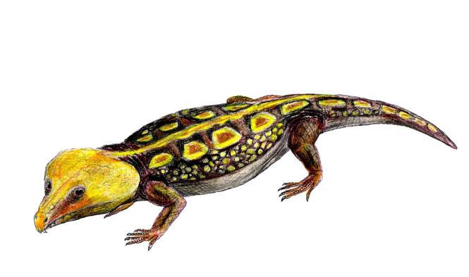 Bei dem Fossil handelt es sich um ein Reptil aus der Gruppe der Captorhinidae.