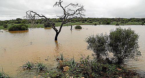 Ein Seitenweg der Autobahn Llucmajor-Campos steht unter Wasser