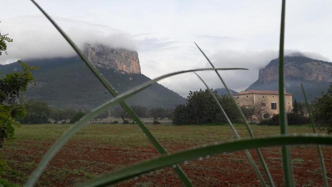 Mild aber feucht sollen die kommenden drei Monate auf Mallorca werden.
