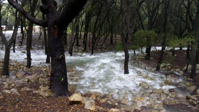 Die Quellen brechen in einem Eichenwald bei Campanet hervor