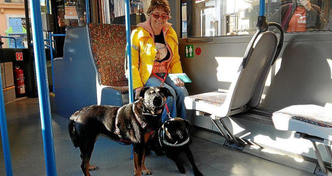 Mit Maulkorb und Leine sind die Hunde in sechs von 29 Stadtbuslinien in Palma de Mallorca willkommen. Achtung: Einsteigen immer