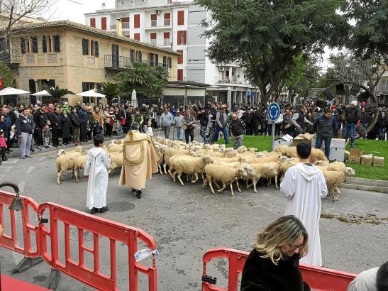 Tierisches Spektakel: In Incas Zentrum wurden am Wochenende ganze Schafherden gesegnet.